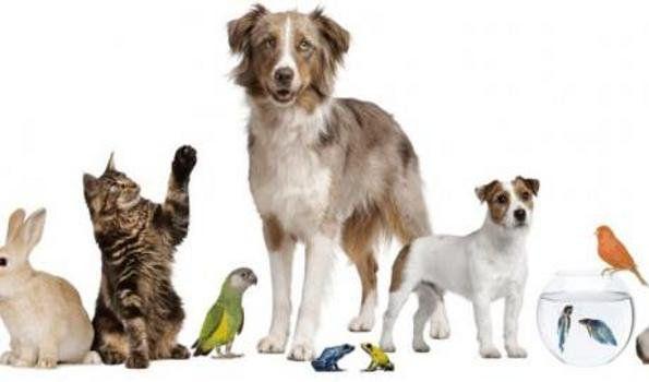 29 de abril: se celebra el Día del Animal en honor al abogado Lucas Albarracín